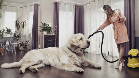 GoVacuum Miele Vacuum repair Services in Virginia